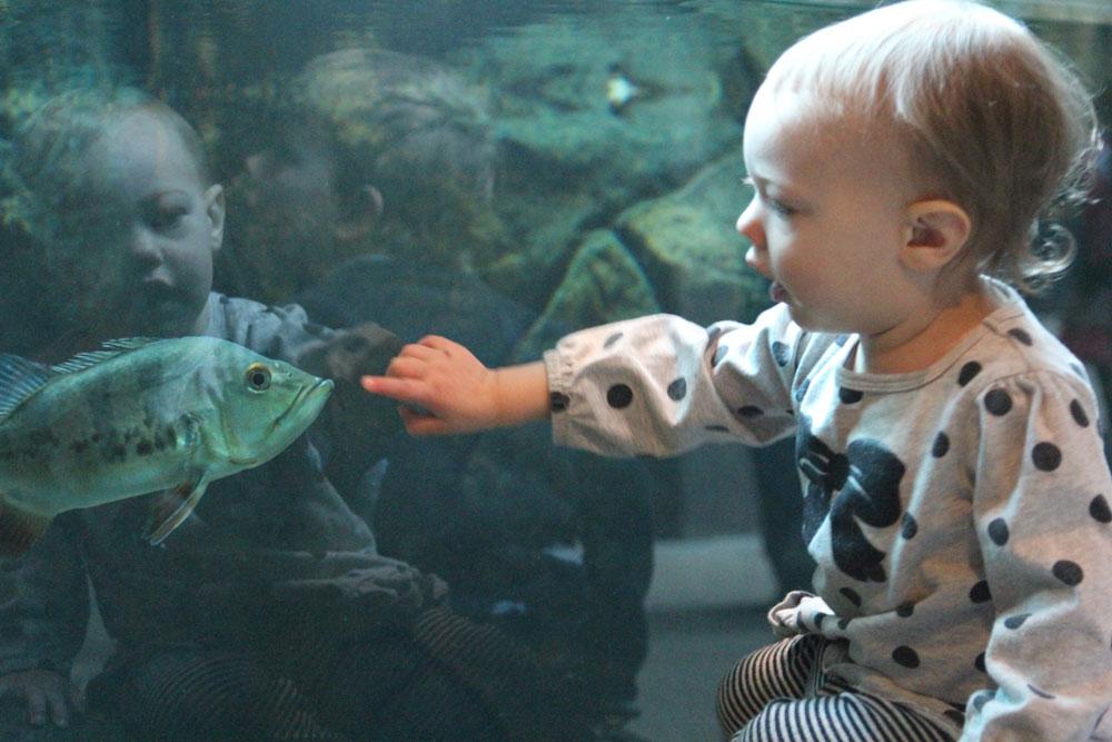 Denver Aquarium Birthday Party  Party Invitations Ideas